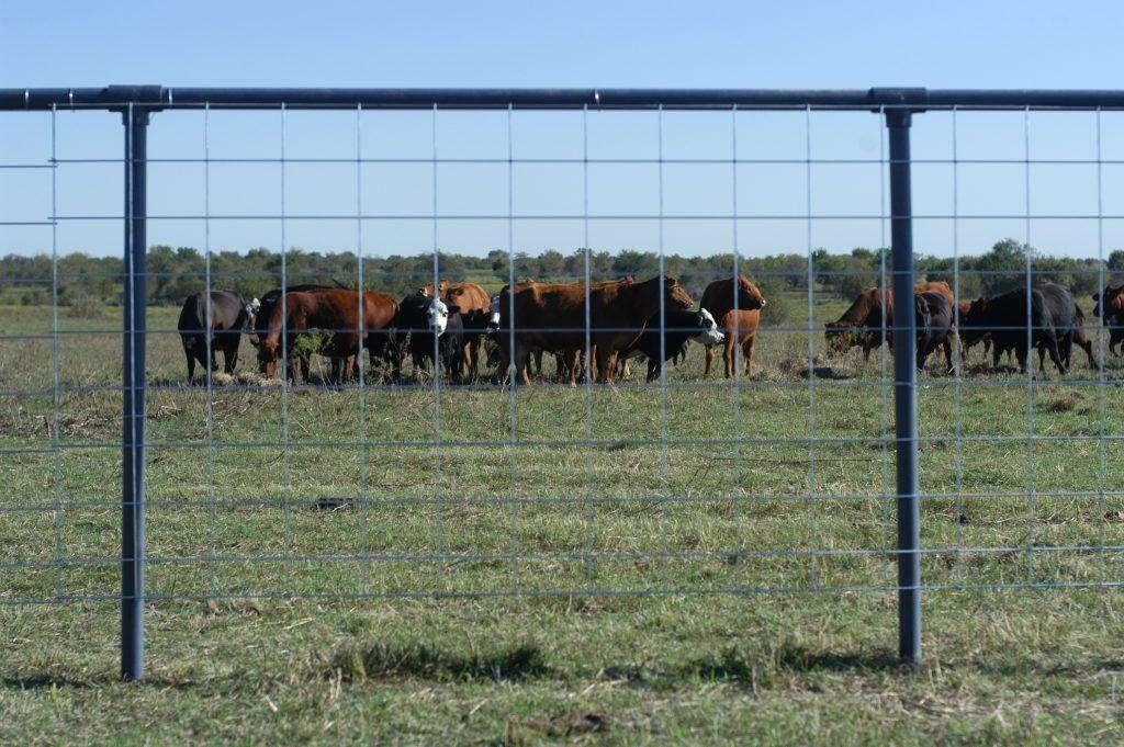 Livestock Panels Ok Brand